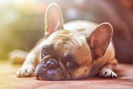 A Step by Step Guide to Pet Friendly Real Estate