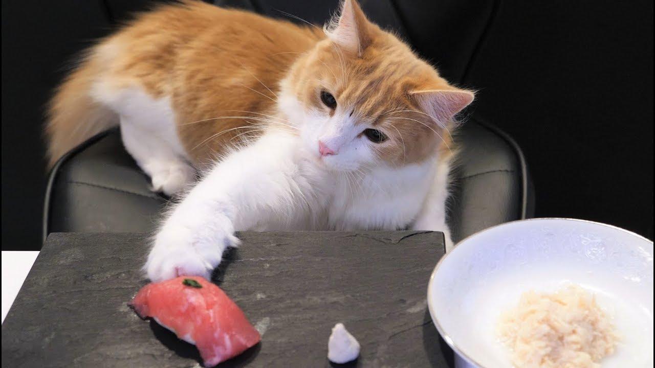 Common Cat Ailments