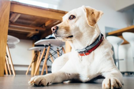 Consumer Habits of Sniffing Out Pet Friendly Hotels and Accommodations