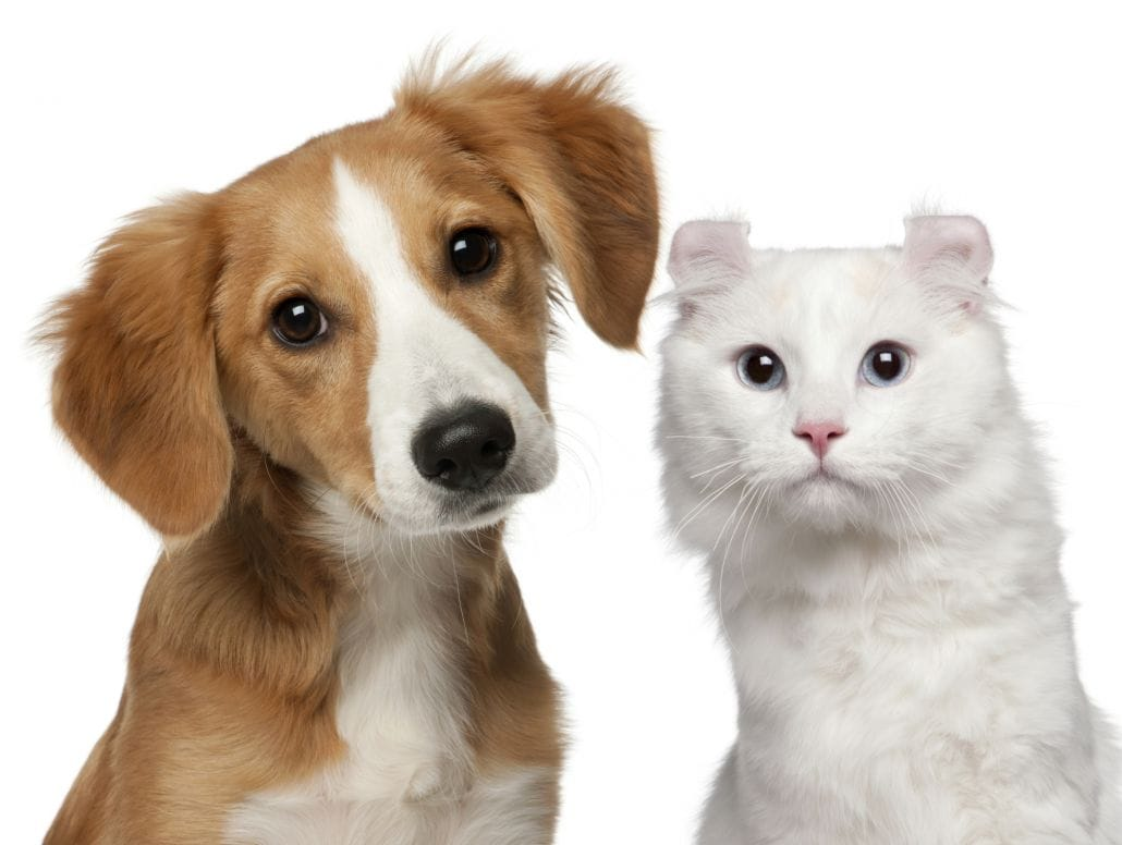 Ensure Proper Dog Hygiene With Dog Grooming in Broomfield