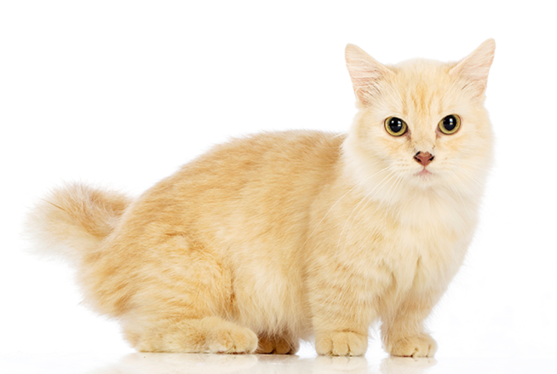 Prepare Your Cat to Cease Scratching Your Sofa in 7 Days or Much less