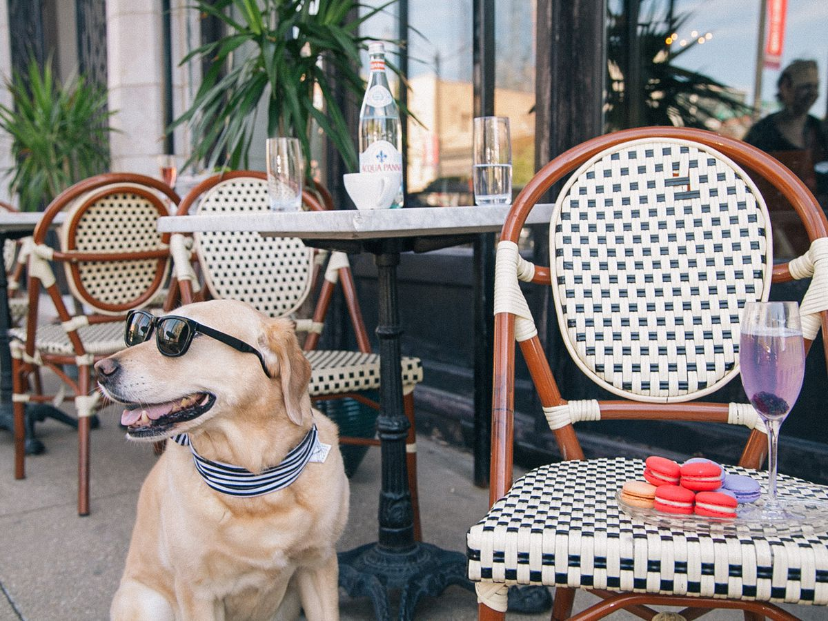 What to Anticipate in a Pet Pleasant Lodge