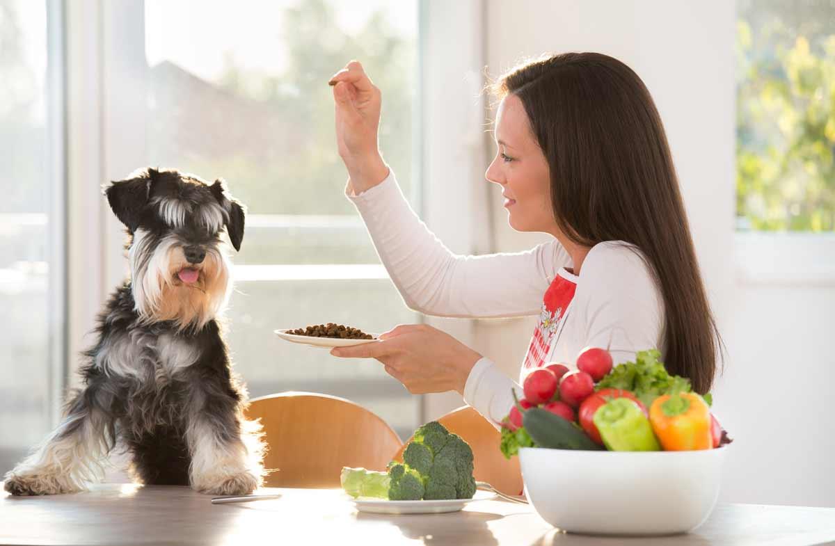 Arthritis: Diagnose and Treatment of Dog Arthritis with CBD