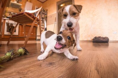 3 Best Indoor Activities For Dogs