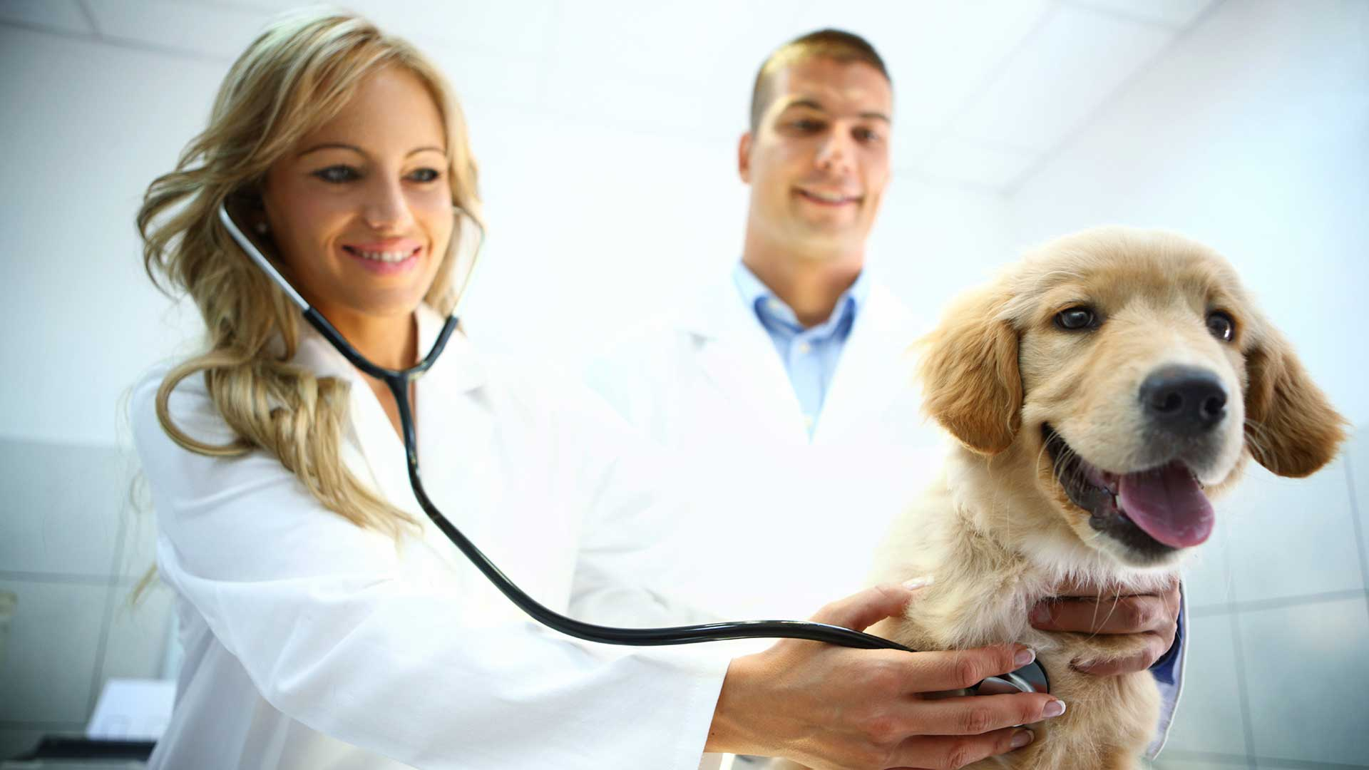5 Steps to Forestall Intestinal Parasites in Canine