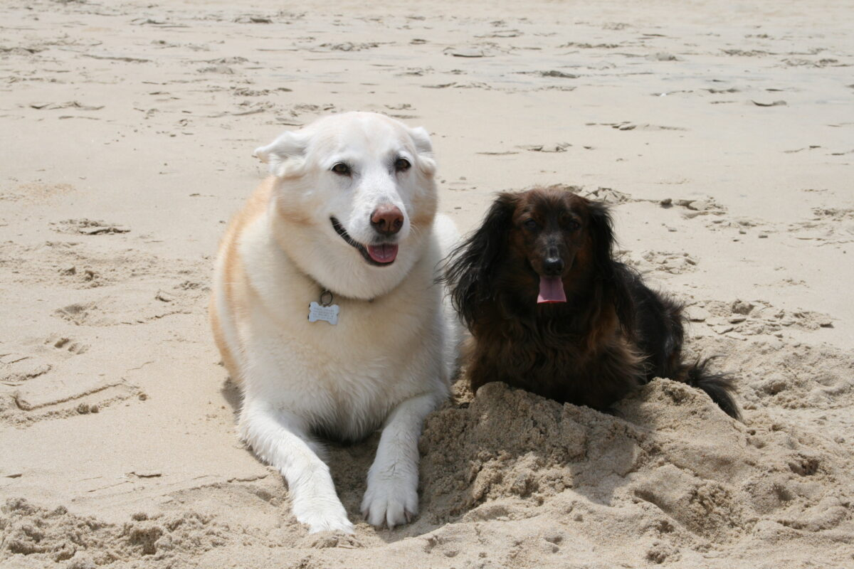 Finding Pet Friendly Hotels Along Your Travel Route