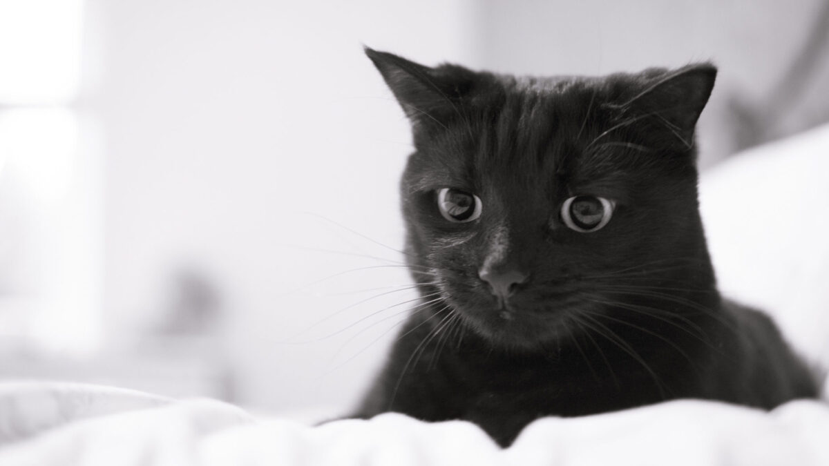 Interesting Facts About Your Beloved Cat