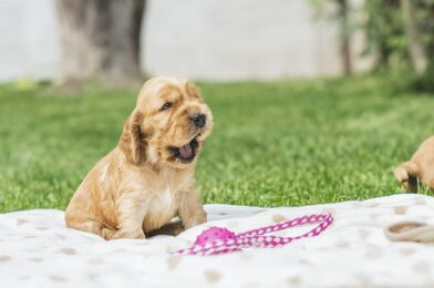 Kennel Cough- What Every Dog Parent Needs to Know: