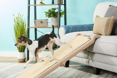 Shop for Pet Things Hassle-Free Online In Australia